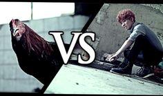 Block B kyung vs rooster from video Nillili Mambo Block B Kyung, Po Block B, Bbc, B Bomb, I Still Love Him, No Way Out, Kpop, Pop Bands, Vixx