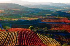 SPAIN, LA ROIJA, BEAUTIFUL AUTUMN COLORS