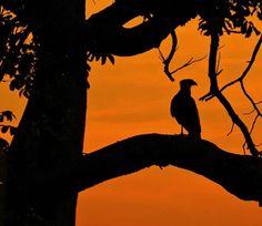 Ao cair da tarde. ..se levanta imagens... momentos... sombras.... #birdlovers #sunsets #sunset #pordosol #entardecer #anoitecer #birds #birdlover #instabird #instabirds #birdwatching #birdwatcher #aves #avesdobrasil #avesdocerrado #carcará #sombras #contraluz #passaros #avesderapina #goiania #goianiawalk #gyn #instameetblackgyn #senadorcanedo #nikonp600 #nature #natureza #naturezaperfeita by dirnei_vogel http://ift.tt/1Tq4PxY