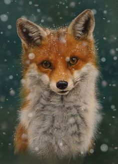 Winter fox - maybe painted as a wooden sign or ornament, . - Winter fox – maybe painted as a wooden sign or ornament, - Cute Baby Animals, Animals And Pets, Beautiful Creatures, Animals Beautiful, Fuchs Illustration, Fox Pictures, Fox Art, Cute Fox, Red Fox