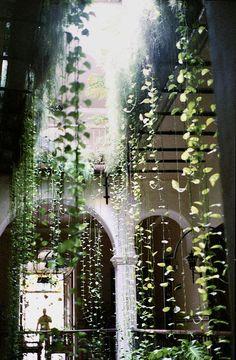 A beautiful display of hanging atrium