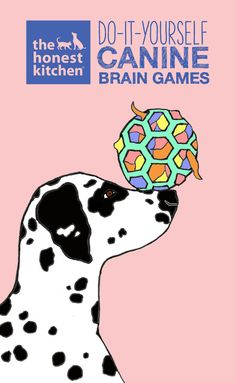 """Dog owners are often told, """"A tired dog is a good dog."""" Check out these two DIY canine brain games to get your dog moving!  #THK #TheHonestKitchen #HonestKitchen #dog #dogs #health #lifestyle #games #DIY"""