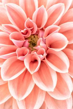 Check out Close up of dahlia flower by Lorena on Creative Market