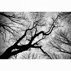 vinz77's photo on Instagram Black Tree  #2470 #24mm #bologna #italy #parkcity #trees #bw #canon_official #gardens #italy #giardinimargherita #6d
