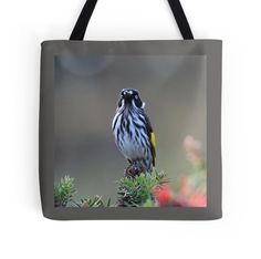 'new holland honeyeater has spotted me ' Tote Bag by shotbysas . Framed Prints, Canvas Prints, Art Prints, New Holland Honeyeater, New Bag, Bag Sale, Cotton Tote Bags, Chiffon Tops, Classic T Shirts