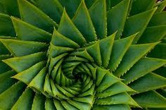 Image result for circles in nature