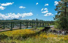 Woodland Lake Pinetop Arizona Photo Credit: Michael Moriarty Photography