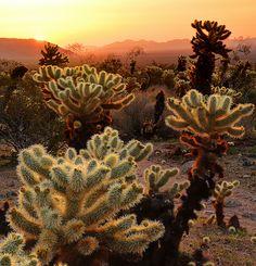 Morning Star Joshua Tree National Park by Ireena Eleonora Worthy