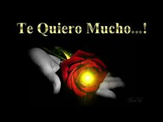 Una rosa para ti | Frases con imágenes bonitas de amor - YouTube