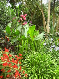 Tropical Garden Ideas Nz fuschia procumbens, nz native lush groundcover, edible berries