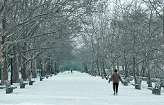 Winter Walk--Riverside Park New York City in Snow