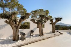 Garden, olive trees, wall. Modern Mediterranean chalet with sunset views in Cala Tarida, Ibiza. Ref. 569100, for sale, by Kelosa | Ibiza Selected Properties