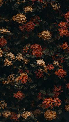 Watercolor Wallpaper Iphone, Flower Iphone Wallpaper, Flowery Wallpaper, Graphic Wallpaper, Iphone Background Wallpaper, Scenery Wallpaper, Aesthetic Pastel Wallpaper, Aesthetic Backgrounds, Nature Wallpaper