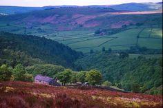 the English moors