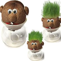 Mini DIY Magic Grass Plant Pot Grass Head Doll Indoor Potted Plant – gyomall webstore – Keep up with the times. Mini Diy, Muñeca Diy, Grass Pattern, Chia Pet, Grass Seed, Garden Crafts, Diy Doll, Spring Crafts, Garden Pots