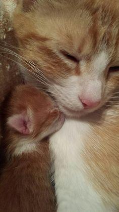 """cat1105: """"thetruestoryofmylife: """"Kitten snuggles """" """""""