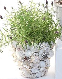 Decorate ordinary terra cotta pots with seashells.