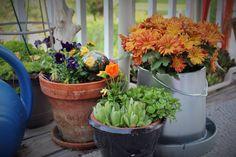 Adding new pots, 2014 MPB Garden Photos, Spring Colors, Pots, Flowers, Royal Icing Flowers, Flower, Cookware, Florals, Jars