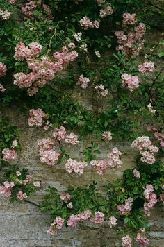Romantic Roses in the English countryside. My Floral Affair book now available to preorder on shabbychic.com