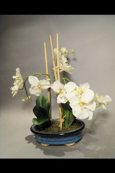 Low arrangement with white orchids