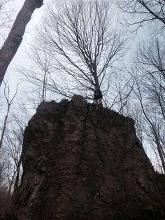 Rock climbing Rock Climbing, Earth, World, Plants, The World, Flora, Mountaineering, Climbing, Plant