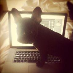 Eddie - Our French Bulldog Puppy