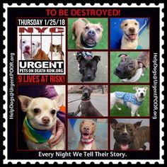 TO BE DESTROYED. Dedicated to Saving NYC Shelter Animals