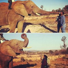 Are you up for an adventure this weekend? []:@kirstpuley  #photooftheday #elephantadventure #elephantkiss #africa #nature #wildlife #instalike #adventure #elephant #feedanelephant #animals #outdoor #getoutanddostuff #wild #guvongram