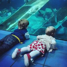 Day at the aquarium