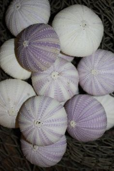 Check out 60) pcs, Purple Sea Urchins, Sea Urchins, Purple Sea Urchin, Urchin, Ornament crafts, table top, candle craft, mirror decor, wedding decor on runningtide