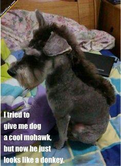 Dog Mohawk Looks Like Donkey