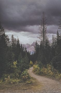 man-and-camera:  Yoho National Park Trail Head ➾ Luke Gram Going through old photos that I haven't published cause it's raining so much