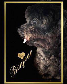Hello🐶🐶🍩🍩🍩🍼morning . . . . . . #dogs_of_world #poodlesofficial #愛犬 #potd #pets_of_instagram #iphone8plus #doglover #안녕하세요 #プードル #写真好きな人と繋がりたい #写真 #おはよう #petstagram #子犬 #l4f #dogs_of_instagram #animallover #petstagram #photoofday #トイプードル #happymonday #doglovers #goodmorning #푸들 #dogslife #puppys #犬 #개침대#개집#lovedog #instagramdogs
