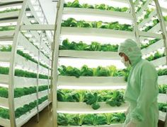 Vertical farms sprouting all over the world - tech - 16 January 2014 - New Scientist