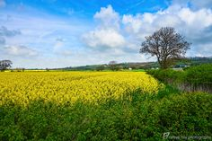 England's Green and Pleasant Land - 4 by Steve Hey on 500px