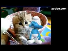 Schlumpf & Co. Süß, lustig, lustiges❤ von Zoobe Schlümpfe. Liebe, Ostern, Weihnachten, alles. - YouTube Cats, Youtube, Animals, Fictional Characters, Cute Baby Cats, Baby Kitty, Good Morning Funny, Truths, Cartoon