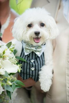 Yes, these animals are better dressed than most human wedding guests
