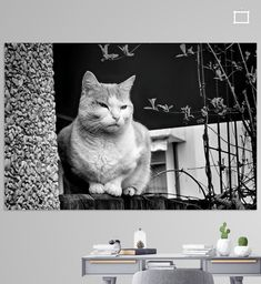 Aloof Poster - mimulux patricia no