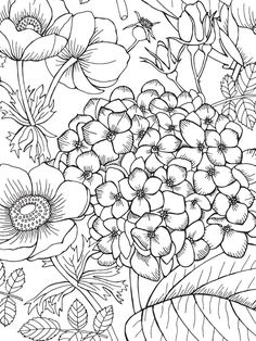 coloring pages - Terapia da cor 5 36 photos VK Blank Coloring Pages, Printable Adult Coloring Pages, Flower Coloring Pages, Mandala Coloring, Coloring Books, Free Coloring, Dibujos Zentangle Art, Floral Drawing, Illustration