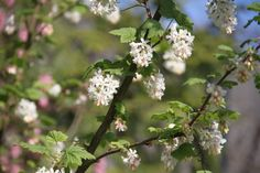Spring Blooms, Fruit, Plants, Plant, Planets, Spring Colors