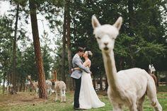 25 fotones de bodas de 2014 que deberías ver