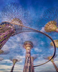 Supertree Grove. Gardens by the Bay. Singapore.