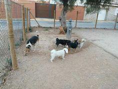 Juegos en el parque canino 06/16 Brown, Ginger, Richie, George, Milo, Benita, Robin, Martín