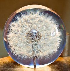 Paperweight Dandelion - LAUSCHA GLASS ART