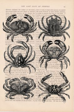 Vintage crabs: AND, my horoscope is Cancer, a crab! ema <3