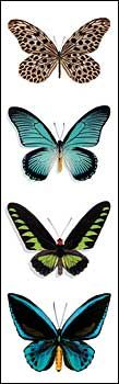 Butterflies Bookmark By Christopher Marley