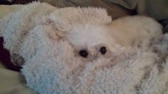My blanket is staring at me!