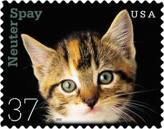 Postage stamp with kitten for spay/neuter campaign Images Gif, Postage Stamp Art, Interesting Animals, Vintage Stamps, Animals Images, Stamp Collecting, Mail Art, Going Postal, Pet Birds