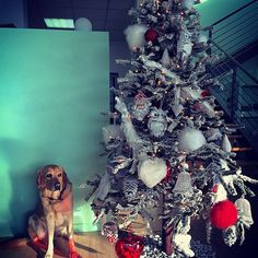 #1december ️ #christmas#dicembre#natale#christmastree#dogs#fmcar#christmasiscoming#happiness#love#hope http://blog.fmcarsrl.com/wp-content/uploads/2016/12/15276712_1615128878783446_8610881138912657408_n.jpg http://blog.fmcarsrl.com/index.php/2016/12/01/1december-%ef%b8%8f-christmasdicembrenatalechristmastreedogsfmcarchristmasiscominghappinesslovehope/