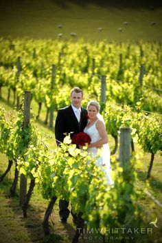 Beautiful vineyard setting, Mission Estate Winery wedding - Tim Whittaker Photography